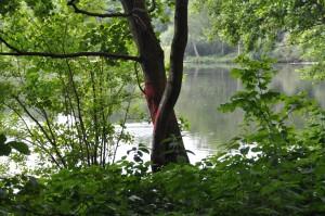 Markierter Baum Nord